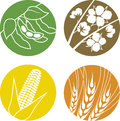 Soybeans cotton corn and wheat an icon set representing various agriculture crops Stock Photos