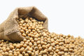 Soybeans in hemp sack bag on white background. Royalty Free Stock Photo