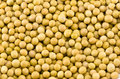 Soybeans lots of photoed in teh studio Stock Photography