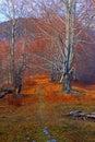 Später autumn forest path Lizenzfreie Stockfotografie