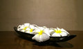 Spa and Aromatherapy Concept, Group of Frangipani Flowers in Black Plate, Still Life Royalty Free Stock Photo