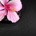 Spa background of pink hibiscus flower on zen basalt stone with Royalty Free Stock Photo