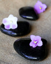 Spa black stones with lilac flowers Stock Images