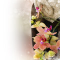 Spa composition with beautiful orchid Royalty Free Stock Images