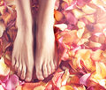 Spa compositions of sexy female legs and petals Royalty Free Stock Photo