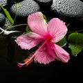 Spa concept of blooming pink hibiscus passionflower green tendril and zen stones with drops reflection on water closeup Royalty Free Stock Photo