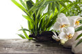 Spa concept decoration with orchids Royalty Free Stock Photo