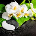 Spa concept of white orchid flower, phalaenopsis, green leaf wit Royalty Free Stock Photo