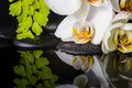 Spa concept of white orchid (phalaenopsis), green branch Royalty Free Stock Photo
