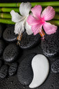Spa concept of white pink hibiscus flower symbol yin yang and natural bamboo on zen basalt stones with drops closeup Stock Image