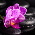 Spa concept of zen stones blooming twig lilac stripped orchid phalaenopsis with drops and reflection on water Stock Photography