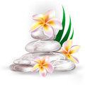 Spa concept zen stones and frangipani flowers Stock Photography