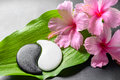 Spa design of pink hibiscus flowers and Yin-Yang of s