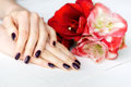 Spa manicure with red and white flowers closeup Stock Photos