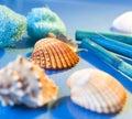 Spa sea shells Stock Photos