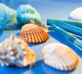 Spa sea shells Royalty Free Stock Photo