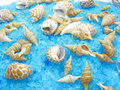 Spa sea shells and salt Stock Images