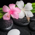 Spa setting of white, pink hibiscus flowers, symbol Yin Yang an