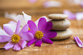 Spa still life with flowers and massage stones Royalty Free Stock Photo