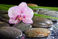 Spa still life with set of pink orchid and stones