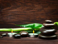Spa still life with zen stone and bamboo Royalty Free Stock Photos