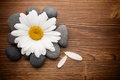 Spa stones balanced with camomile flower and wooden background Stock Images
