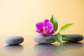 Spa stones and green leaf pink orchid on the glossy yellow background Stock Photo
