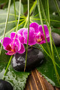 Spa stones sea salt and pink orchid Royalty Free Stock Photo