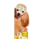 Spa wash dog Royalty Free Stock Photo