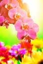 Spa, zen, wellness composition. Orchid flowers Royalty Free Stock Photo