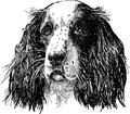 Spaniel portrait vector drawing of the head of the sad Stock Photos