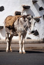 Spanish Donkey Royalty Free Stock Image