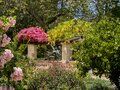 Lush Garden with Angel Trumpet Flowers and Pink Bougainvillea Royalty Free Stock Photo