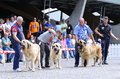 Spanish mastiff pola de siero spain july fifth monograph of in july in pola de siero spain mastiffs competion Royalty Free Stock Image