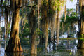 Spanish Moss In The Bayou