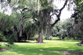 Spanish moss hanging from live oak trees oaks at the avery island nature preserve which is located near the tabasco sauce factory Stock Photo