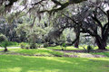 Spanish Moss Hanging from Live Oak Trees