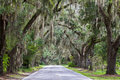 Spanish Moss and Live Oak Trees Stock Photography