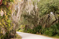 Spanish Moss Pathway Royalty Free Stock Image