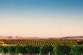 Spanish Vineyard Landscape