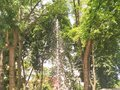 Sparkling fountain between the trees