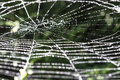 Sparkling spiderweb Royalty Free Stock Photos