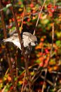 Sparrow on a branch in autumn forest Stock Photos