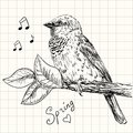Sparrow hand drawn bird sitting on a branch Stock Image