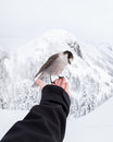 Sparrow on hand in winter