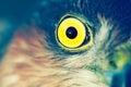 Sparrow hawk birds of europe accipiter nisus Stock Photo