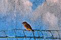 Sparrow small bird passerine sitting on fence animal background Royalty Free Stock Photo