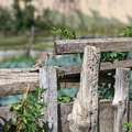 Sparrow on wooden fence house Stock Photo
