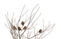 Sparrows on frozen tree Stock Photo