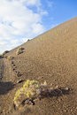 Sparse vegetation on volcanic hills Stock Photography